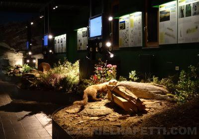 Foto della sala principale con il diorama e le postazioni multimediali